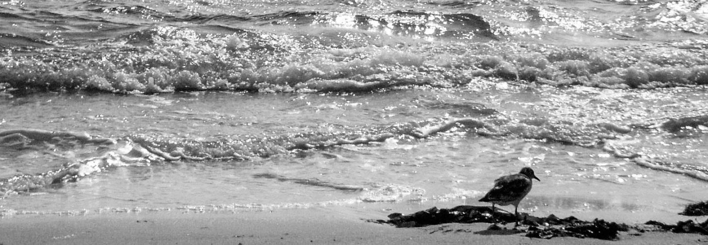 cropped-hav2-1-of-1.jpg